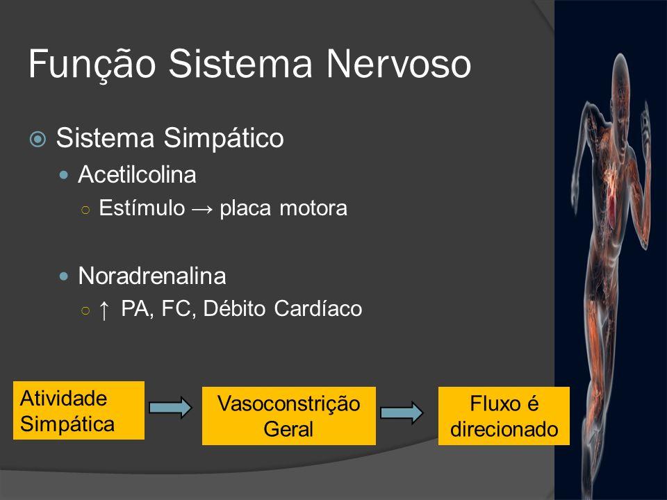Função Sistema Nervoso