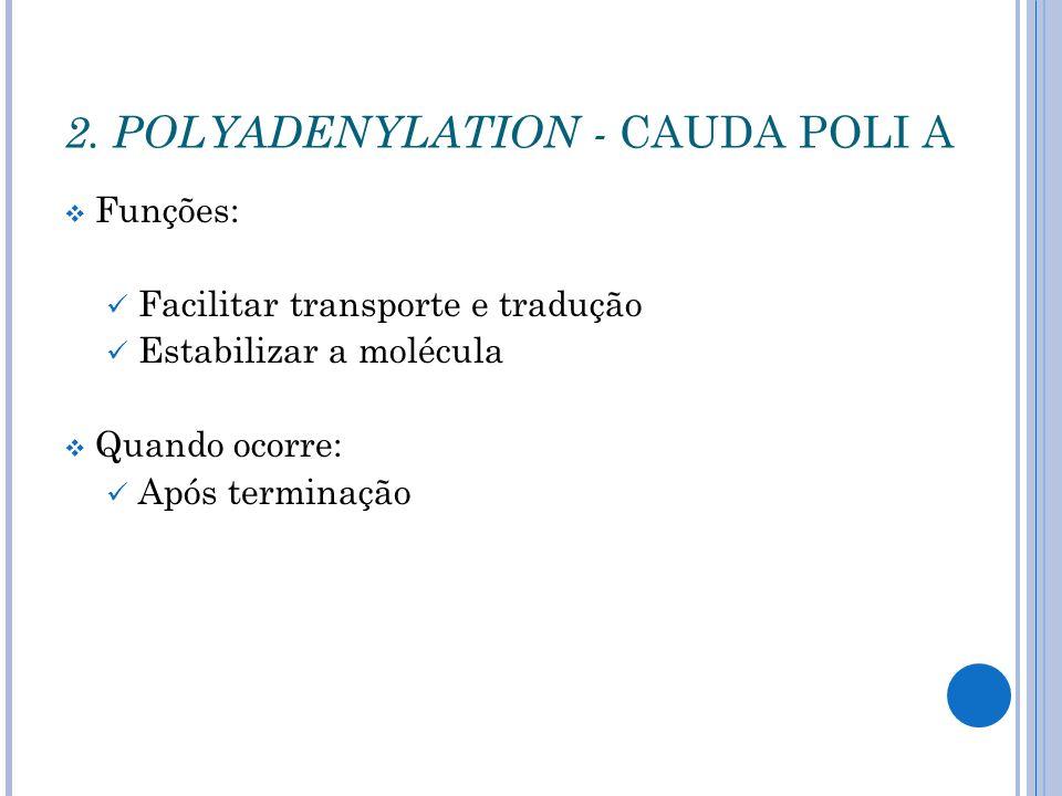 2. POLYADENYLATION - CAUDA POLI A