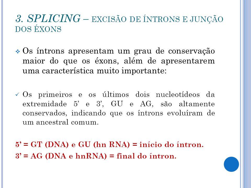 3. SPLICING – EXCISÃO DE ÍNTRONS E JUNÇÃO DOS ÉXONS