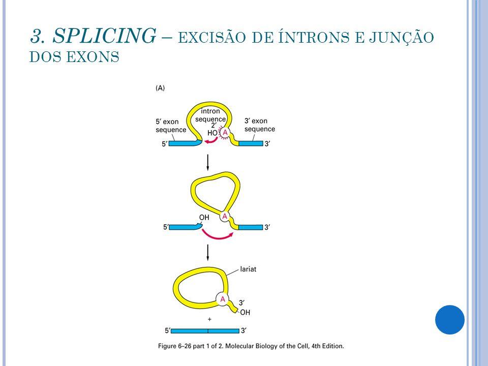 3. SPLICING – EXCISÃO DE ÍNTRONS E JUNÇÃO DOS EXONS