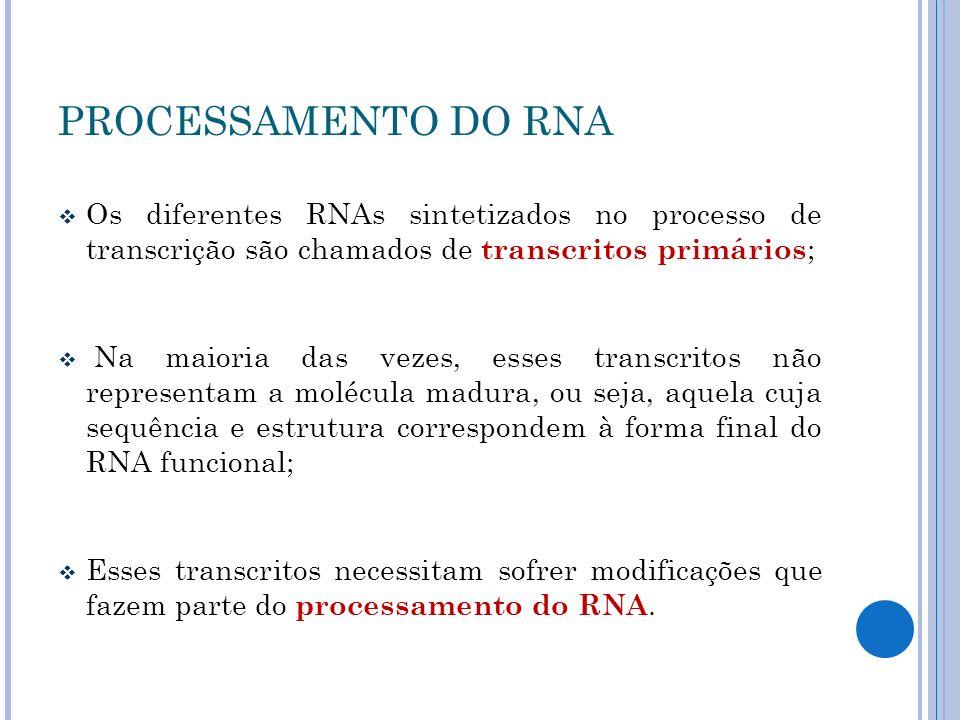 PROCESSAMENTO DO RNA Os diferentes RNAs sintetizados no processo de transcrição são chamados de transcritos primários;