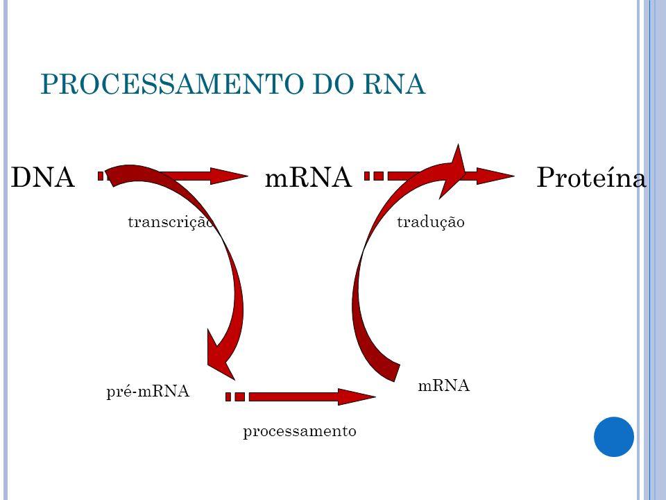 PROCESSAMENTO DO RNA mRNA Proteína DNA pré-mRNA tradução transcrição
