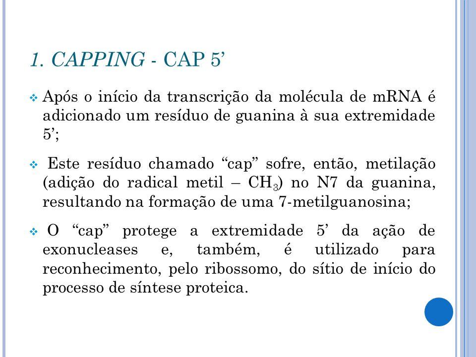 1. CAPPING - CAP 5'Após o início da transcrição da molécula de mRNA é adicionado um resíduo de guanina à sua extremidade 5';