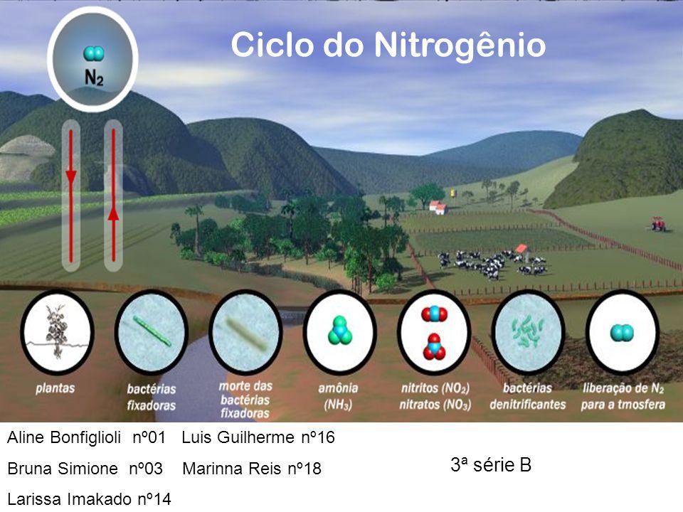 Ciclo do Nitrogênio 3ª série B