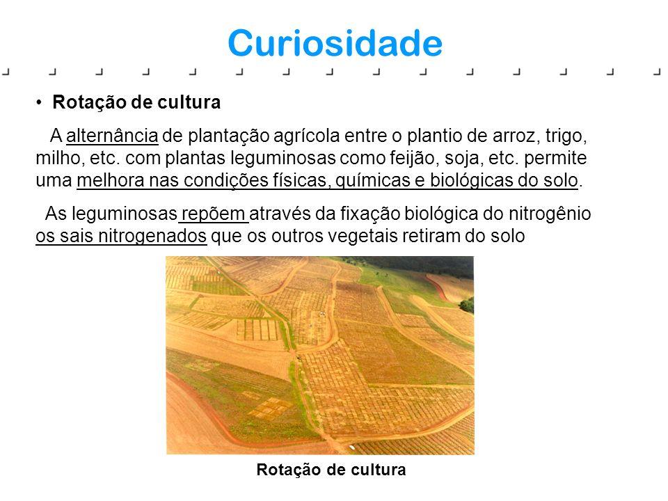 Curiosidade Rotação de cultura