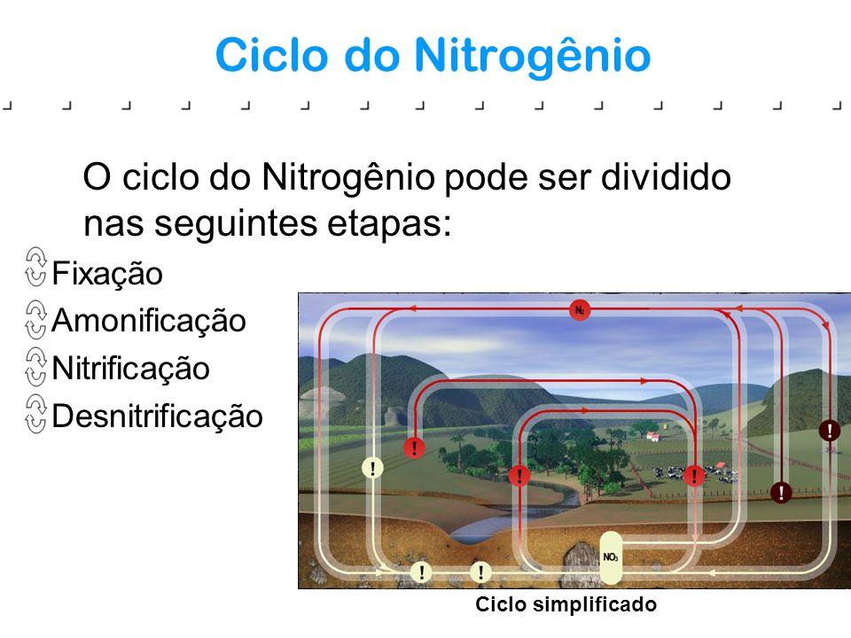 Ciclo do Nitrogênio O ciclo do Nitrogênio pode ser dividido nas seguintes etapas: Fixação. Amonificação.
