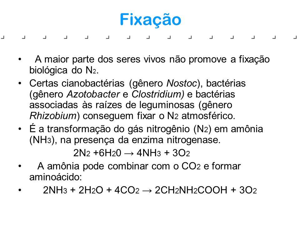 Fixação A maior parte dos seres vivos não promove a fixação biológica do N2.