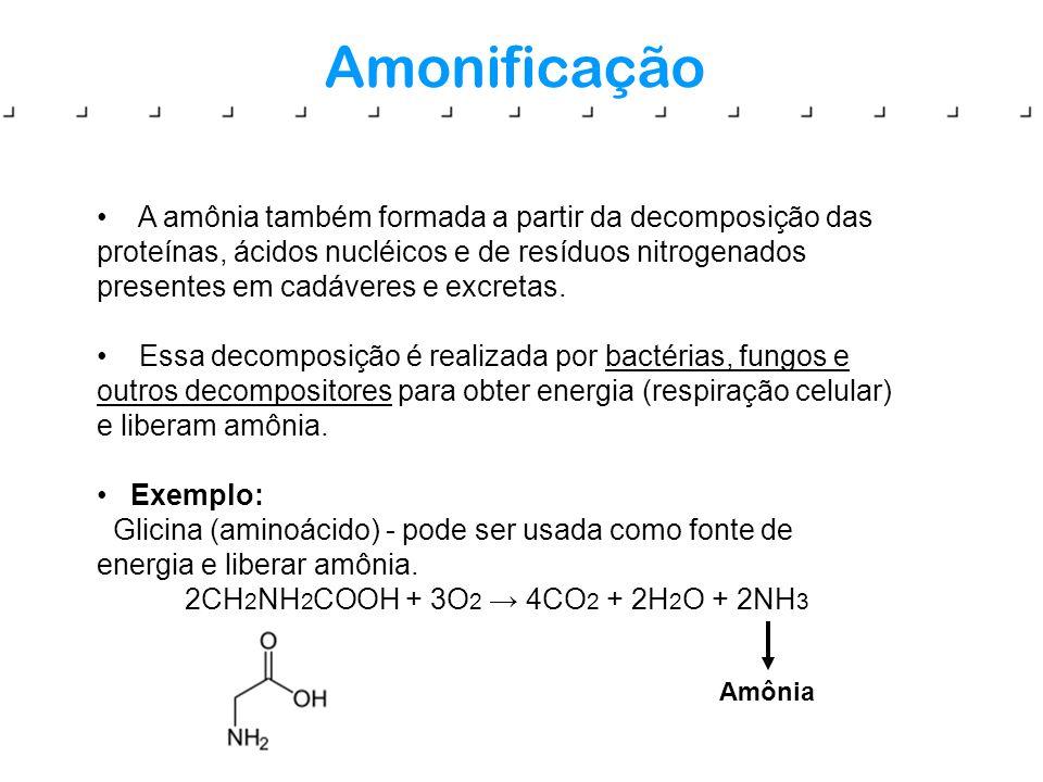 Amonificação