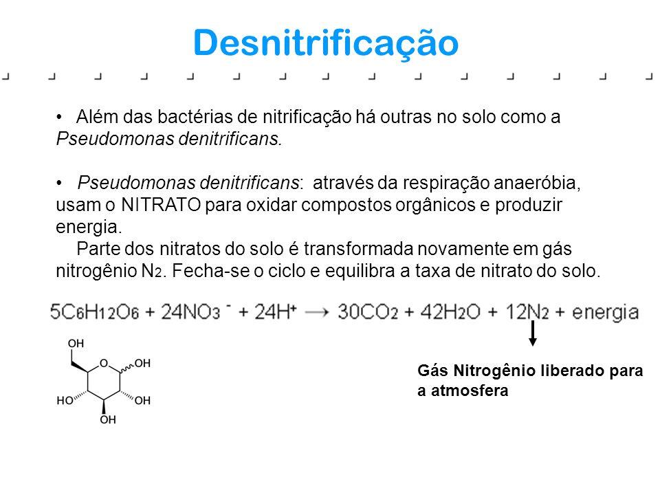DesnitrificaçãoAlém das bactérias de nitrificação há outras no solo como a Pseudomonas denitrificans.