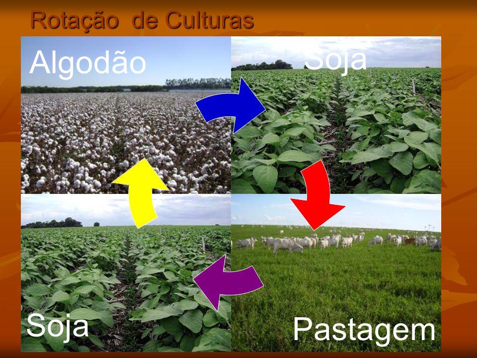 Rotação de Culturas Soja Algodão Soja Pastagem