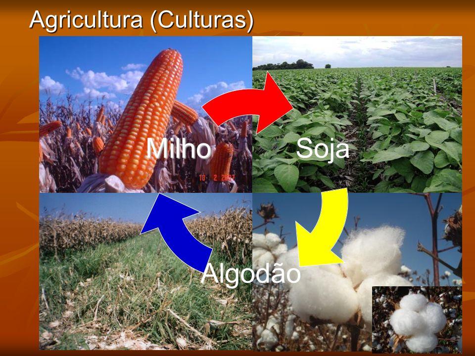 Agricultura (Culturas)