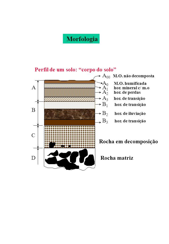 Morfologia Perfil de um solo: corpo do solo A00 M.O. não decomposta
