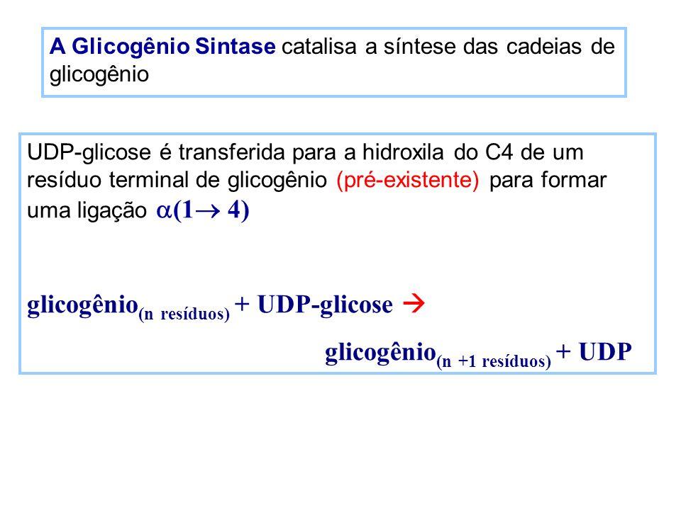 glicogênio(n resíduos) + UDP-glicose  glicogênio(n +1 resíduos) + UDP