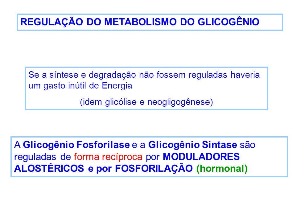 (idem glicólise e neogligogênese)