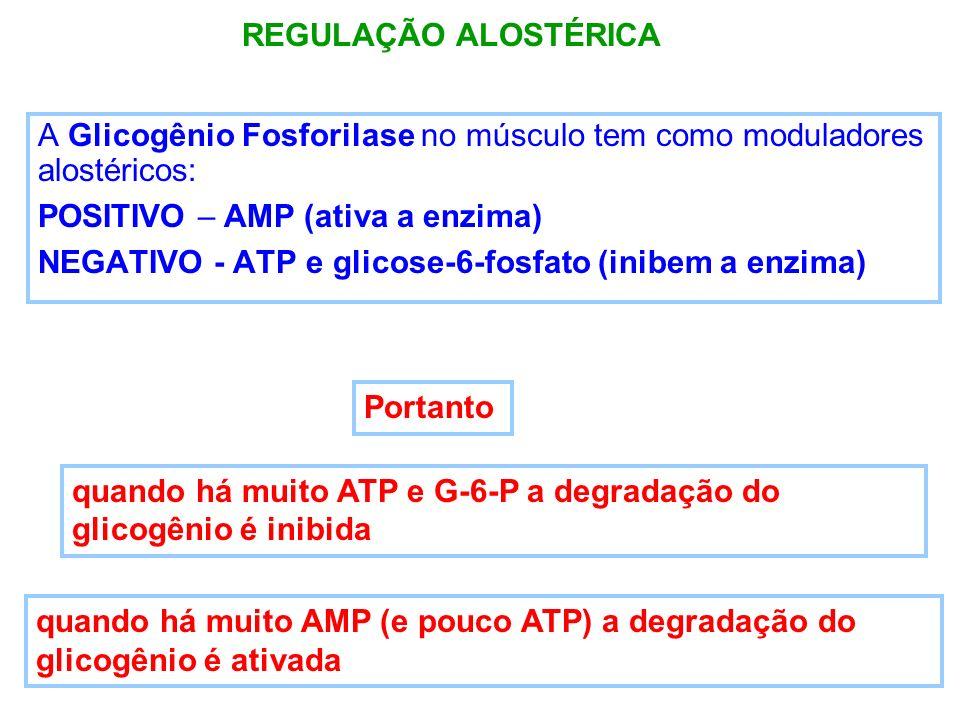 REGULAÇÃO ALOSTÉRICAA Glicogênio Fosforilase no músculo tem como moduladores alostéricos: POSITIVO – AMP (ativa a enzima)