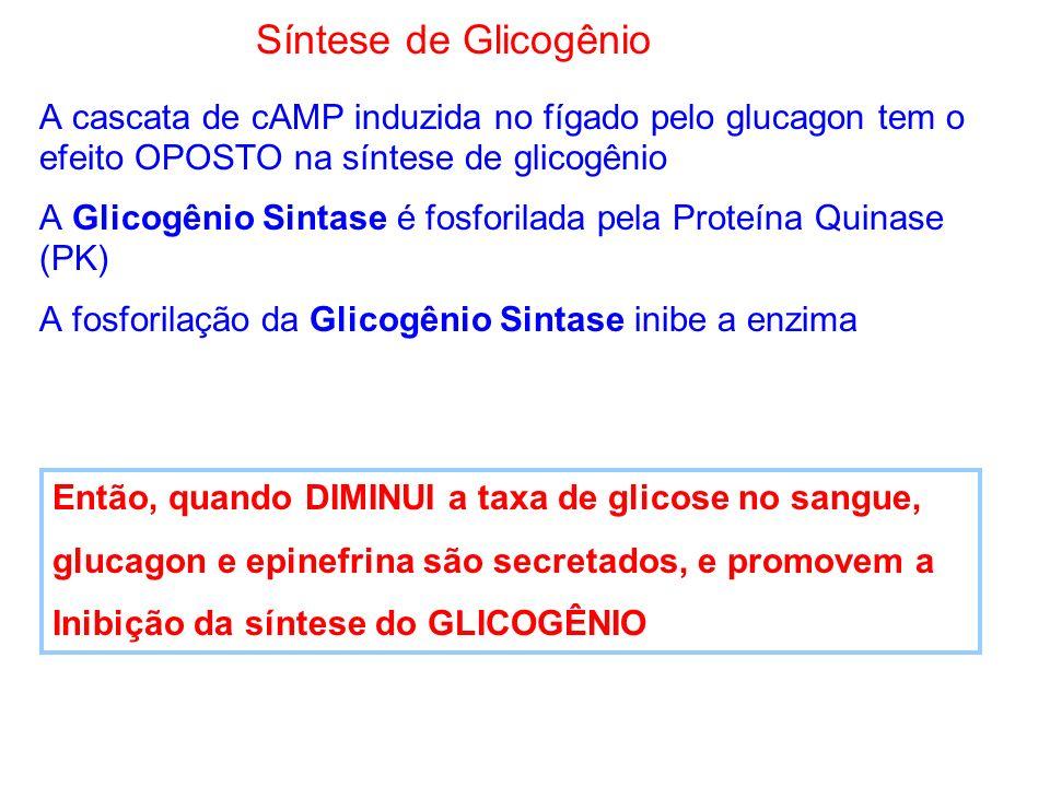 Síntese de Glicogênio A cascata de cAMP induzida no fígado pelo glucagon tem o efeito OPOSTO na síntese de glicogênio.