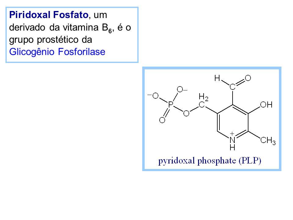 Piridoxal Fosfato, um derivado da vitamina B6, é o grupo prostético da Glicogênio Fosforilase