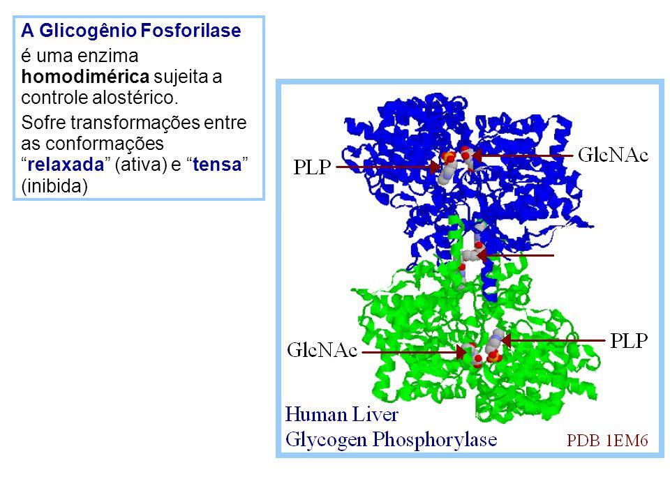 A Glicogênio Fosforilase