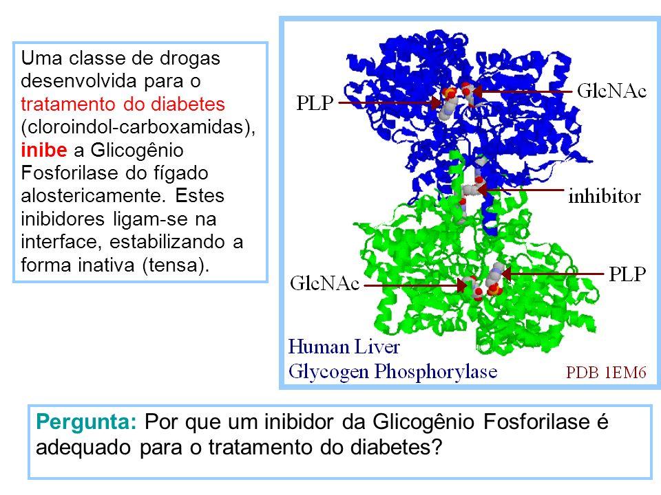 Uma classe de drogas desenvolvida para o tratamento do diabetes (cloroindol-carboxamidas), inibe a Glicogênio Fosforilase do fígado alostericamente. Estes inibidores ligam-se na interface, estabilizando a forma inativa (tensa).