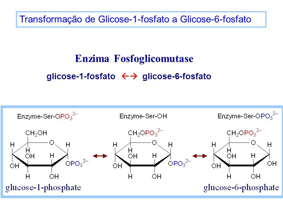 Enzima Fosfoglicomutase