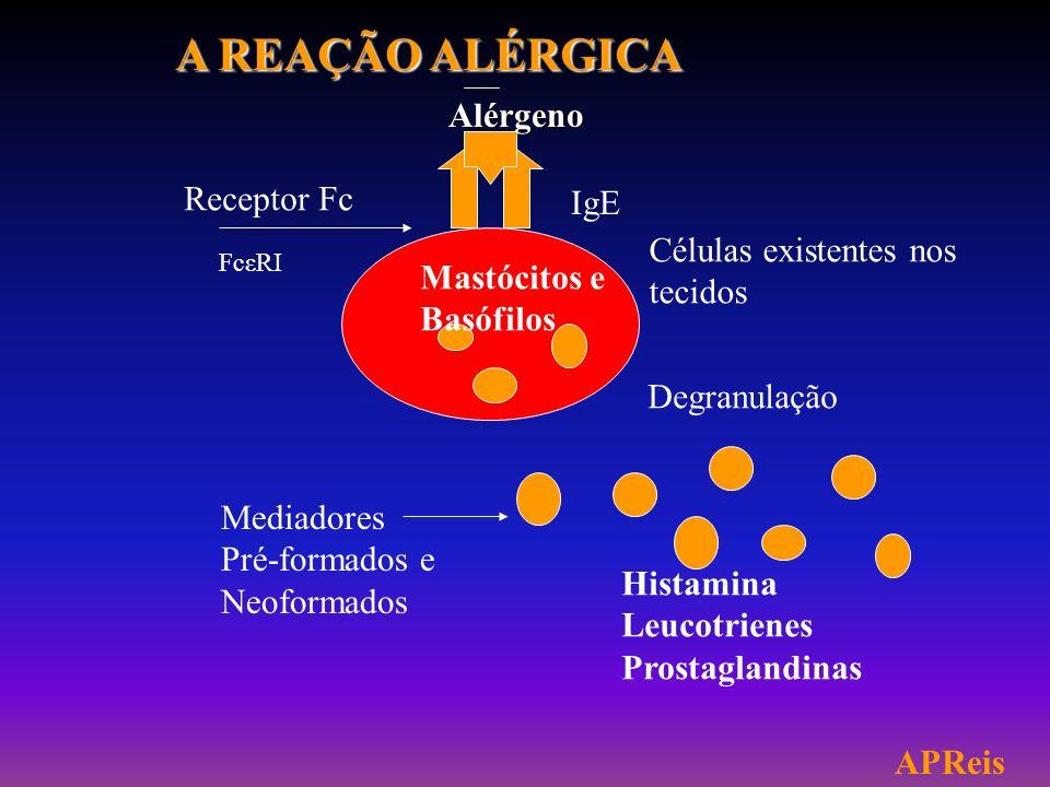 A REAÇÃO ALÉRGICA Alérgeno Receptor Fc IgE