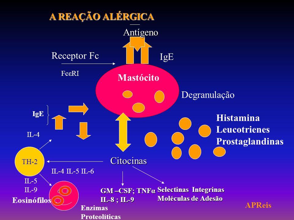 A REAÇÃO ALÉRGICA Antígeno Receptor Fc IgE Mastócito Degranulação