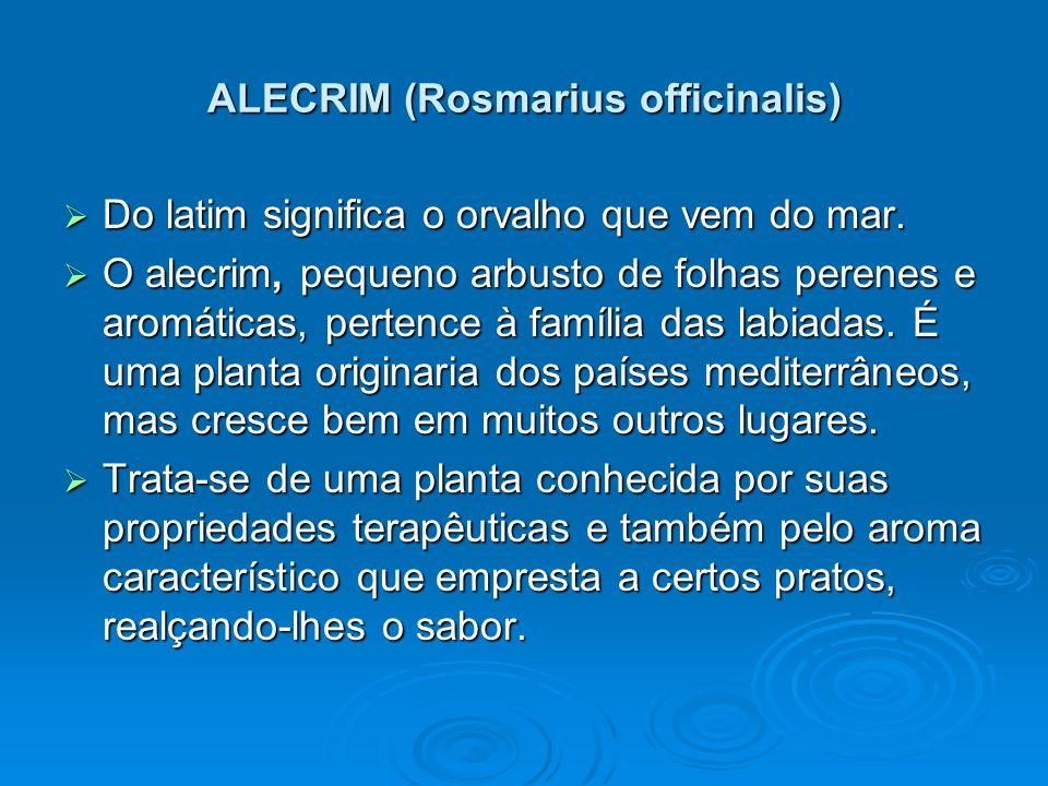 ALECRIM (Rosmarius officinalis)