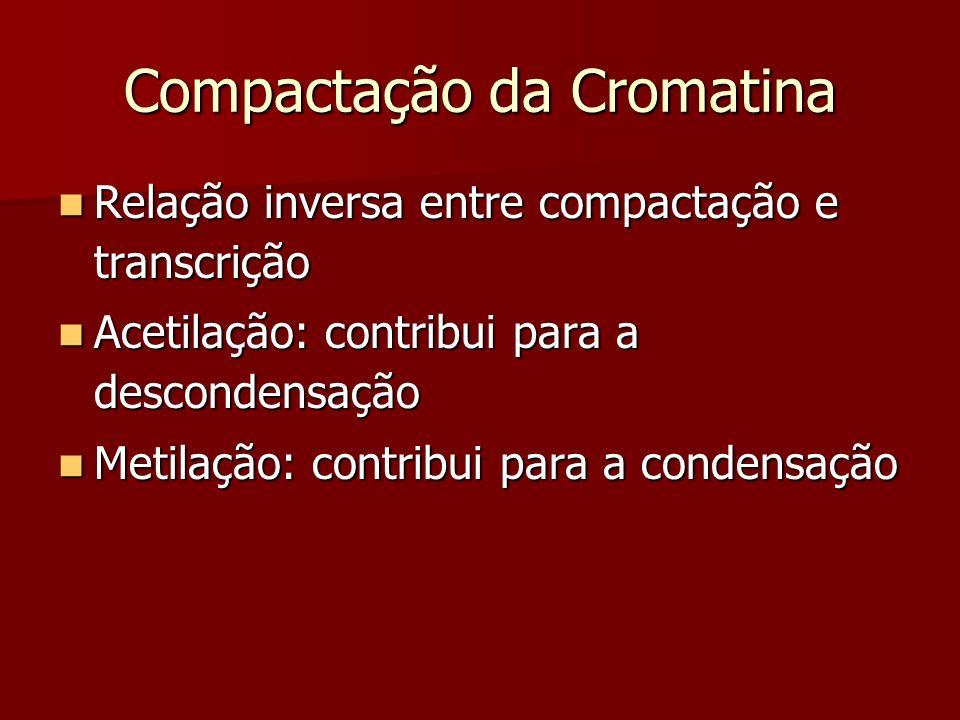 Compactação da Cromatina