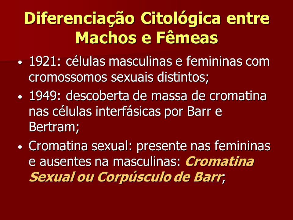 Diferenciação Citológica entre Machos e Fêmeas