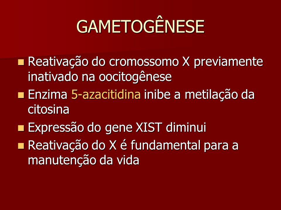 GAMETOGÊNESE Reativação do cromossomo X previamente inativado na oocitogênese. Enzima 5-azacitidina inibe a metilação da citosina.