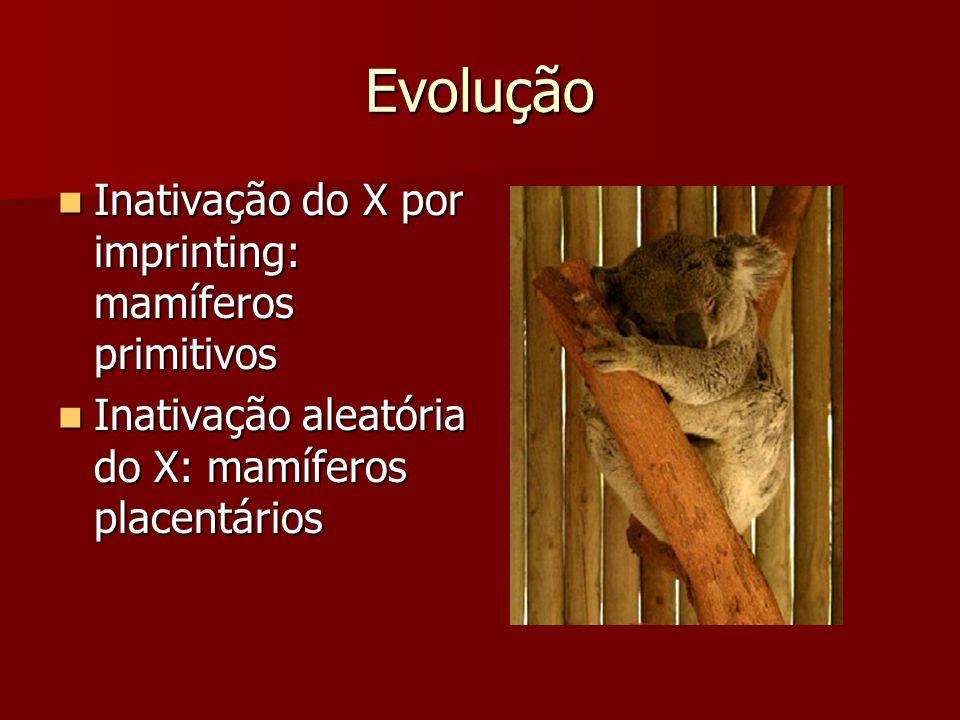 Evolução Inativação do X por imprinting: mamíferos primitivos