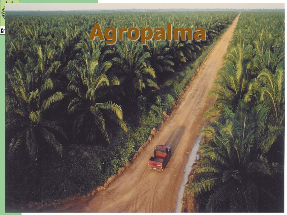 Agropalma