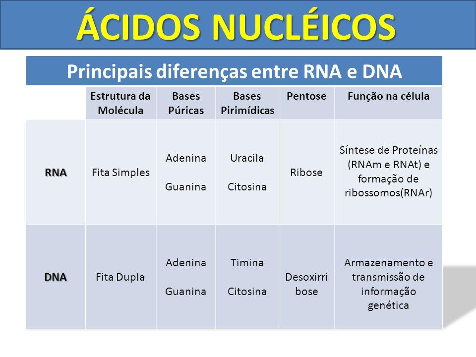 Principais diferenças entre RNA e DNA