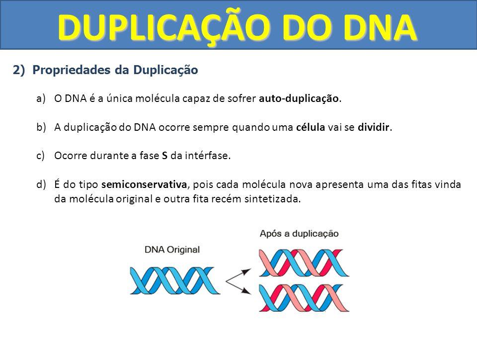 DUPLICAÇÃO DO DNA 2) Propriedades da Duplicação