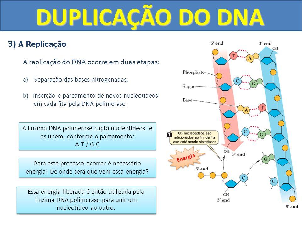 DUPLICAÇÃO DO DNA 3) A Replicação