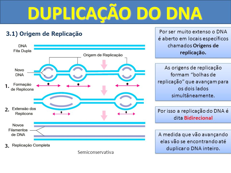Por isso a replicação do DNA é dita Bidirecional