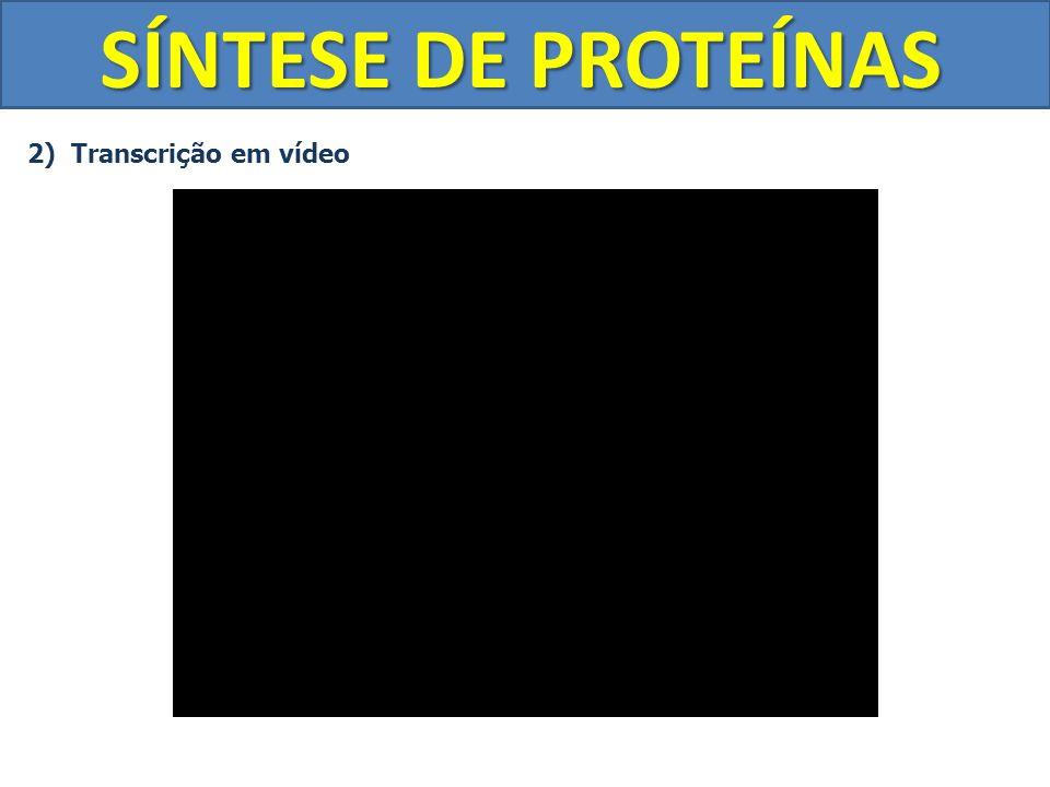 SÍNTESE DE PROTEÍNAS 2) Transcrição em vídeo