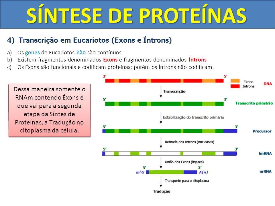 SÍNTESE DE PROTEÍNAS 4) Transcrição em Eucariotos (Exons e Íntrons)