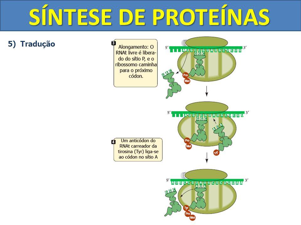 SÍNTESE DE PROTEÍNAS 5) Tradução