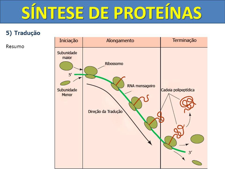 SÍNTESE DE PROTEÍNAS Tradução Resumo