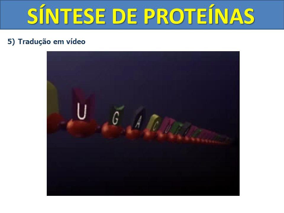 SÍNTESE DE PROTEÍNAS Tradução em vídeo