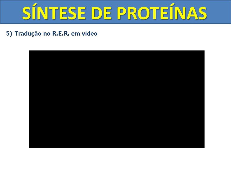SÍNTESE DE PROTEÍNAS Tradução no R.E.R. em vídeo