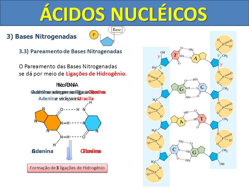 ÁCIDOS NUCLÉICOS 3) Bases Nitrogenadas