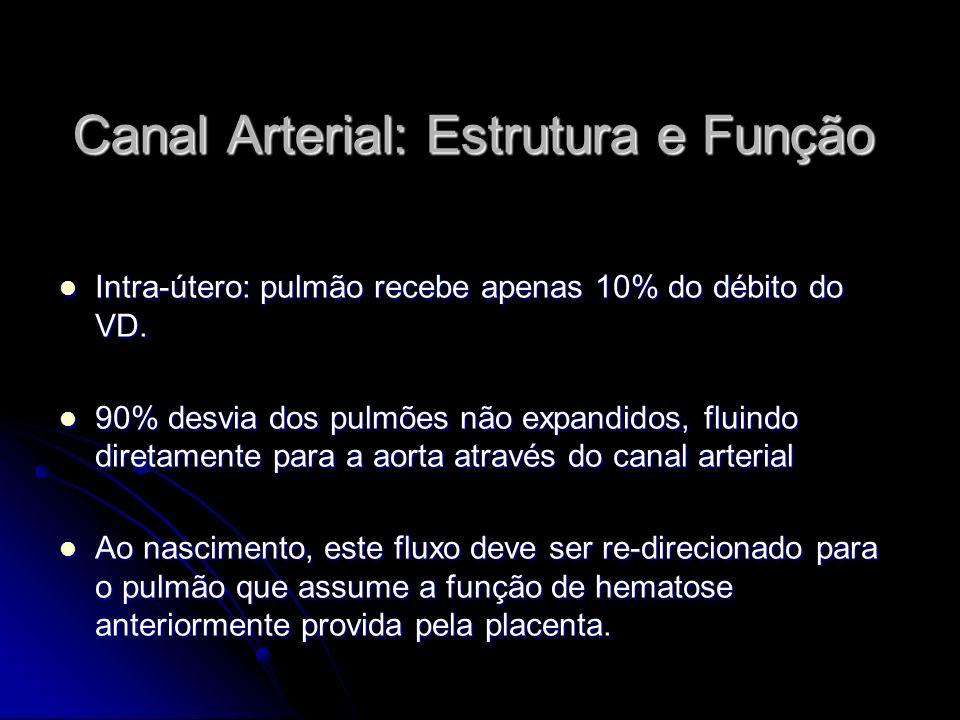Canal Arterial: Estrutura e Função