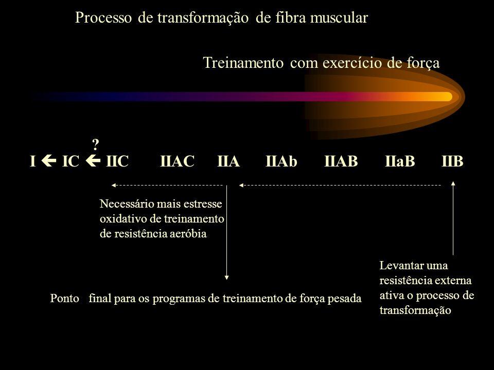Processo de transformação de fibra muscular