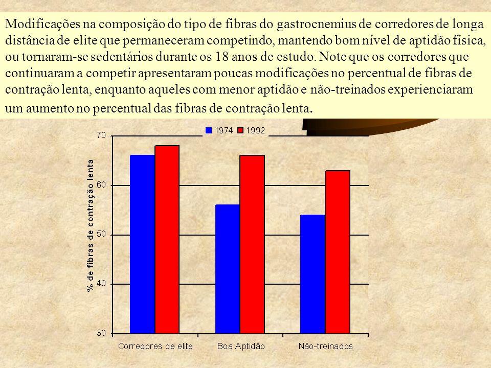 Modificações na composição do tipo de fibras do gastrocnemius de corredores de longa distância de elite que permaneceram competindo, mantendo bom nível de aptidão física, ou tornaram-se sedentários durante os 18 anos de estudo.