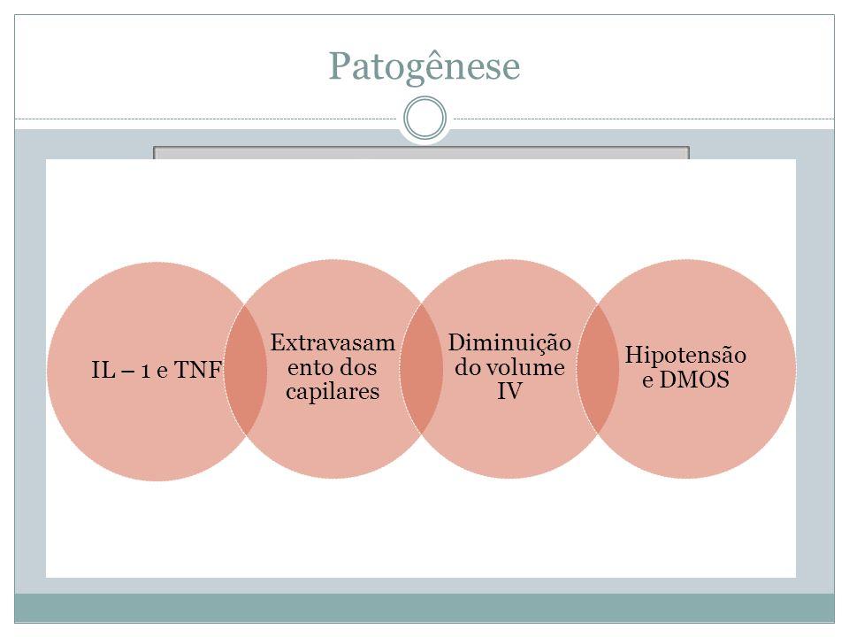 Patogênese Extravasamento dos capilares Diminuição do volume IV