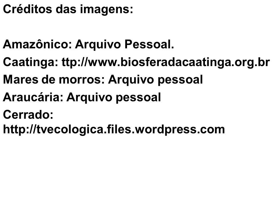 Créditos das imagens: Amazônico: Arquivo Pessoal. Caatinga: ttp://www.biosferadacaatinga.org.br. Mares de morros: Arquivo pessoal.