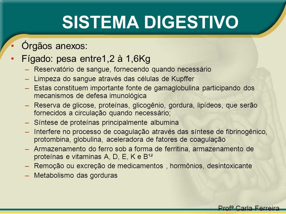 SISTEMA DIGESTIVO Órgãos anexos: Fígado: pesa entre1,2 à 1,6Kg