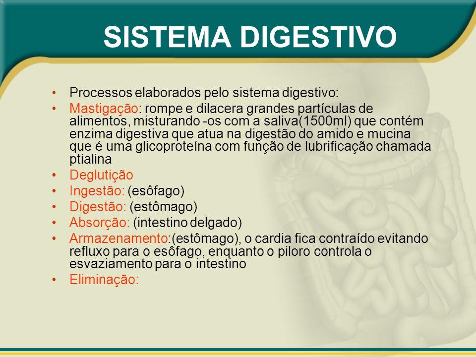 SISTEMA DIGESTIVO Processos elaborados pelo sistema digestivo: